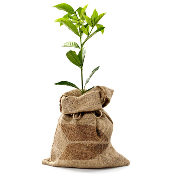 Bamboo-Sock-Tree-PlantV2