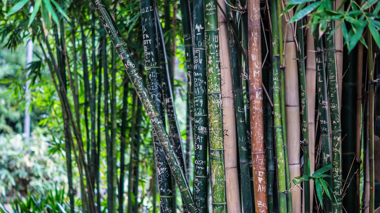 Bamboo Work Socks Review