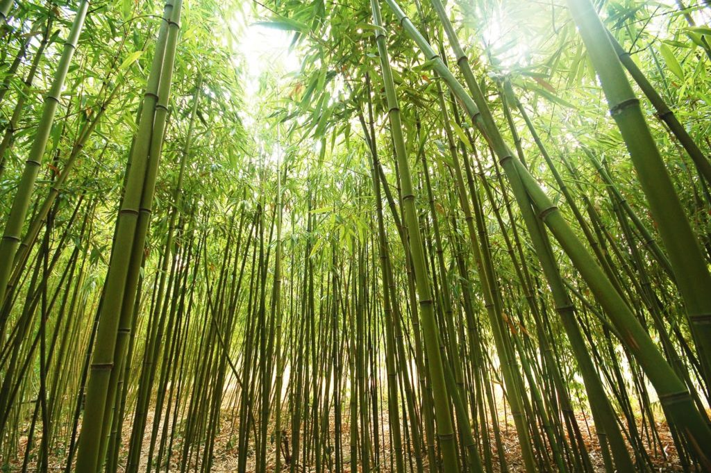 Bamboo trees produce the best padded socks for diabetes in the form of bamboo socks.